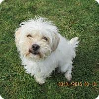 Adopt A Pet :: Ron - Gig Harbor, WA