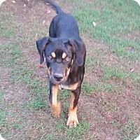 Adopt A Pet :: Tigger - Byhalia, MS