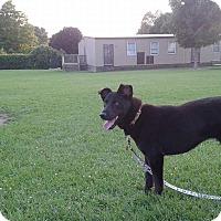 Adopt A Pet :: Duchess - Woodstock, ON