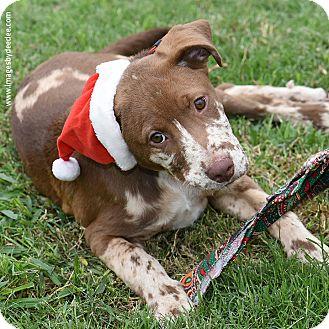 Leander Tx Dog Rescue