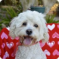 Adopt A Pet :: Huck - Irvine, CA