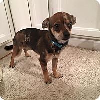 Adopt A Pet :: Sterling - Pitt Meadows, BC