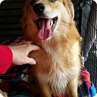 Adopt A Pet :: DEXTER - Gustine, CA