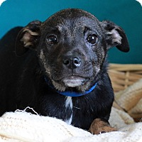 Adopt A Pet :: Keith - Waldorf, MD