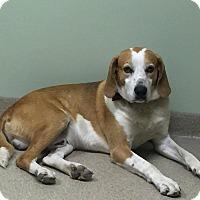 Hound (Unknown Type) Mix Dog for adoption in Creedmoor, North Carolina - Rusty