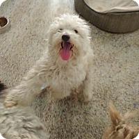 Adopt A Pet :: Patterson - Thousand Oaks, CA
