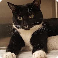 Adopt A Pet :: Simone - Herndon, VA