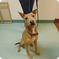Adopt A Pet :: Blue - St. Cloud, FL