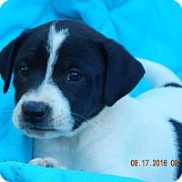 Adopt A Pet :: Karma (7 lb) Video! - SUSSEX, NJ