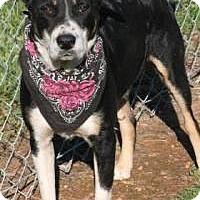 Adopt A Pet :: Cody - Lebanon, ME