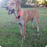 Adopt A Pet :: Stella meet me 9/30 - Manchester, CT