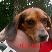 Adopt A Pet :: HELEN - Ventnor City, NJ