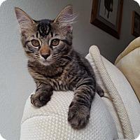 Adopt A Pet :: Shyla - Lodi, CA