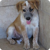 Adopt A Pet :: Annabelle - Hagerstown, MD