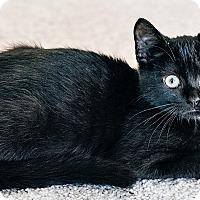 Adopt A Pet :: Shilo - Durham, NC
