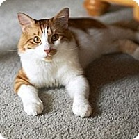 Adopt A Pet :: Finn - Sherman Oaks, CA