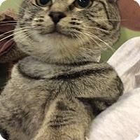 Adopt A Pet :: Millie - Breinigsville, PA