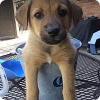 Adopt A Pet :: Tammy - Denver, CO