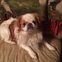 Adopt A Pet :: Koji - Jennings, OK