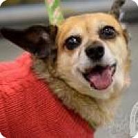 Adopt A Pet :: Tessa - Salt Lake City, UT