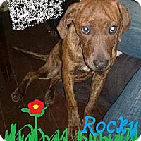 Adopt A Pet :: Rocky - New Orleans, LA