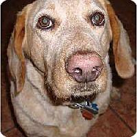 Adopt A Pet :: Rosy - Phoenix, AZ