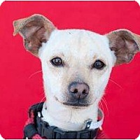 Adopt A Pet :: Hoppy - Poway, CA