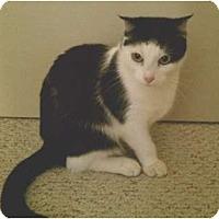 Adopt A Pet :: Freida - Los Alamitos, CA