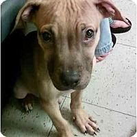 Adopt A Pet :: Logan - Reisterstown, MD