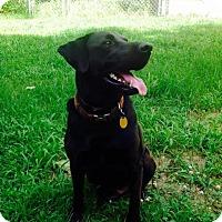Adopt A Pet :: Noah in CT - East Hartford, CT