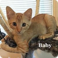 Adopt A Pet :: Baby - Bentonville, AR