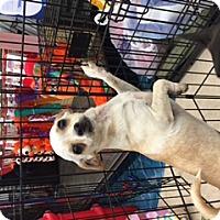 Adopt A Pet :: PEACH - Rancho Cucamonga, CA