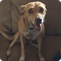 Adopt A Pet :: Chloe - San Saba, TX