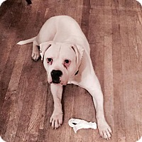 Adopt A Pet :: Tofu - Davison, MI