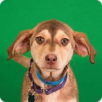 Adopt A Pet :: Noel - Berkeley Heights, NJ