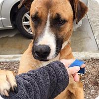Adopt A Pet :: Sawdust - San Diego, CA