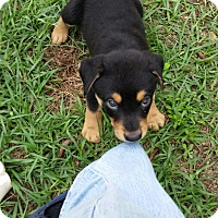 Adopt A Pet :: Fallon - Weeki Wachee, FL