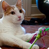Adopt A Pet :: Leo - Marietta, GA