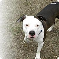 Adopt A Pet :: Toby - Framingham, MA