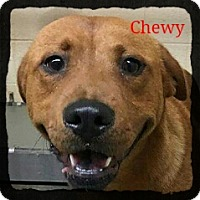 Adopt A Pet :: Chewy - Old Saybrook, CT