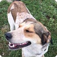 Adopt A Pet :: Esther - Medora, IN