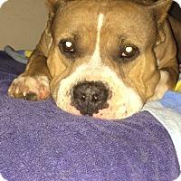 Adopt A Pet :: Kahleesi - San Diego, CA