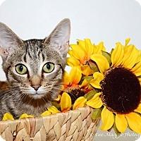 Adopt A Pet :: Bogie - Hazel Park, MI
