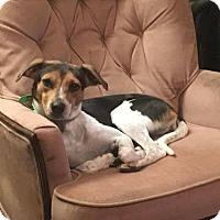 Adopt A Pet :: Izzie - Laingsburg, MI