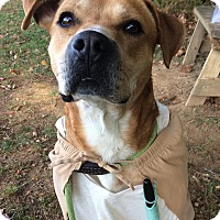 Adopt A Pet :: Stewie - Unionville, PA