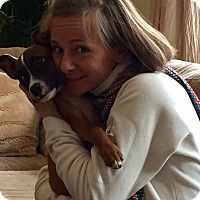 Adopt A Pet :: NICK - HARRISBURG, PA