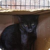 Adopt A Pet :: Vain - Windsor, CT