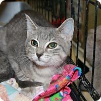 Adopt A Pet :: Bernadette - Rochester, MN