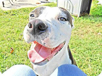 American Pit Bull Terrier Mix Dog for adoption in Houston, Texas - Baby