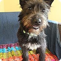 Adopt A Pet :: Zee - Wytheville, VA